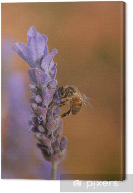 Obraz na płótnie Pszczoła - Pory roku