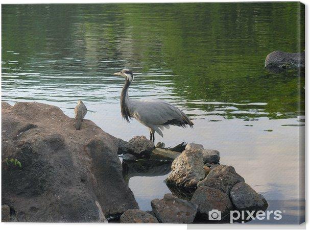 Obraz na płótnie Ptak brodzący w miejscowości Gardin w Kauai na Hawajach - Ptaki