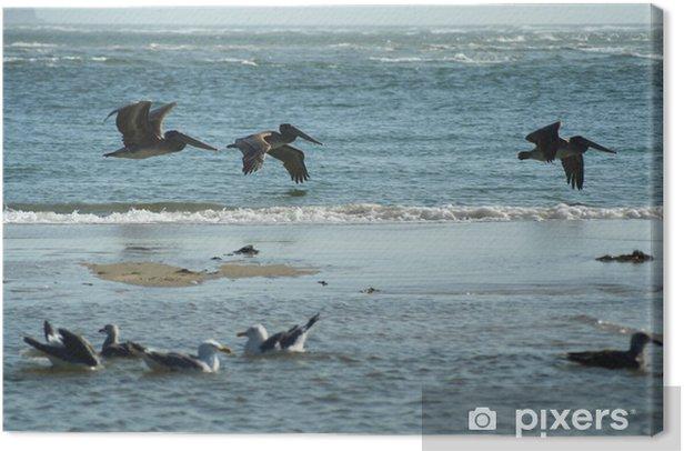 Obraz na płótnie Ptaki w locie 3 - Ptaki