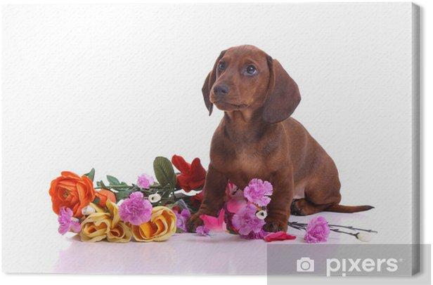 Obraz na płótnie Puppy jamnik z kwiatami - Ssaki