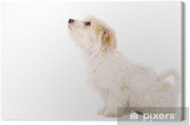 Obraz na płótnie Puppy siedział samodzielnie na białym tle - Ssaki