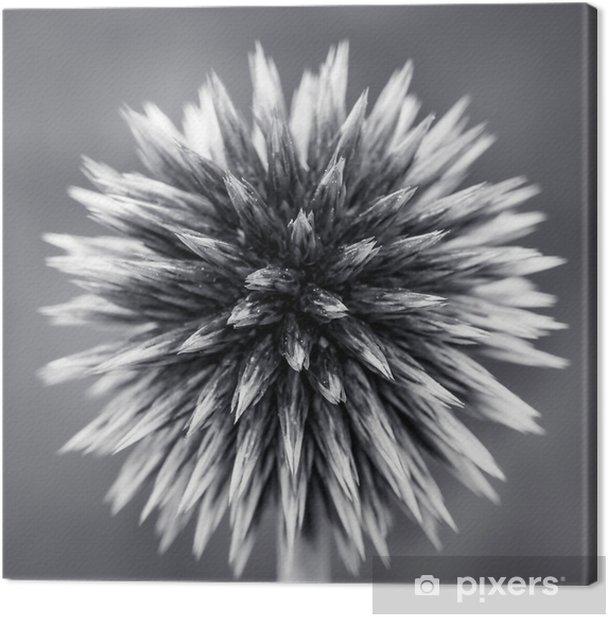 Obraz na płótnie Purpurowy Globe Thistle B - Rośliny i kwiaty