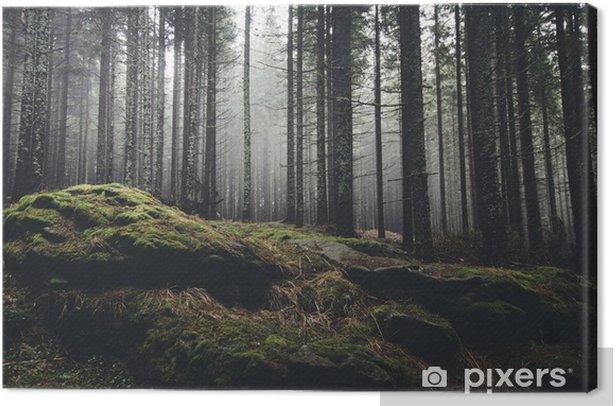 Obraz na płótnie Pustynia krajobraz z lasu sosny i mech na skałach - Tematy