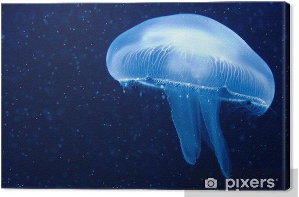 Obraz na płótnie Qualle w Blau - Zwierzęta żyjące pod wodą