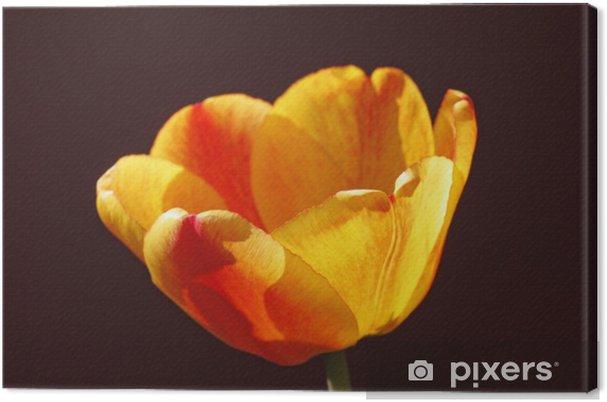 Obraz na płótnie Radiant Tulip - Kwiaty