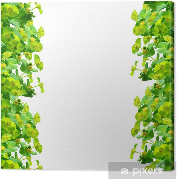 Obraz na płótnie Ramka roślin zielonych - Tła