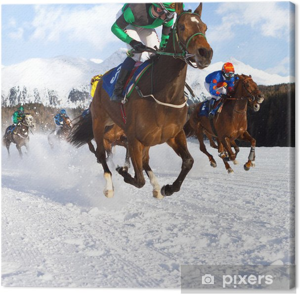 Obraz na płótnie Rasy koni w śniegu - Sporty indywidualne