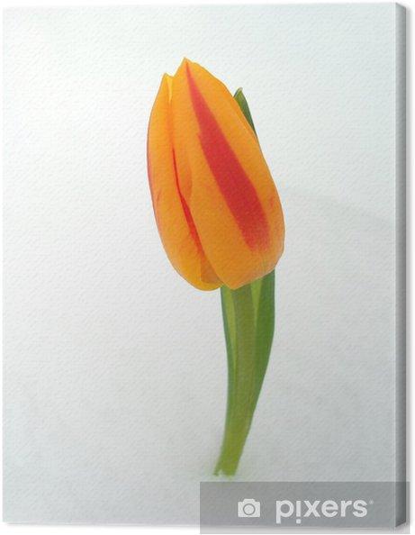 Obraz na płótnie Red and Orange Tulip - Pory roku