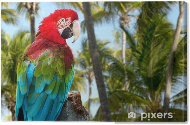 Obraz na płótnie Red ara o charakterze - Ptaki