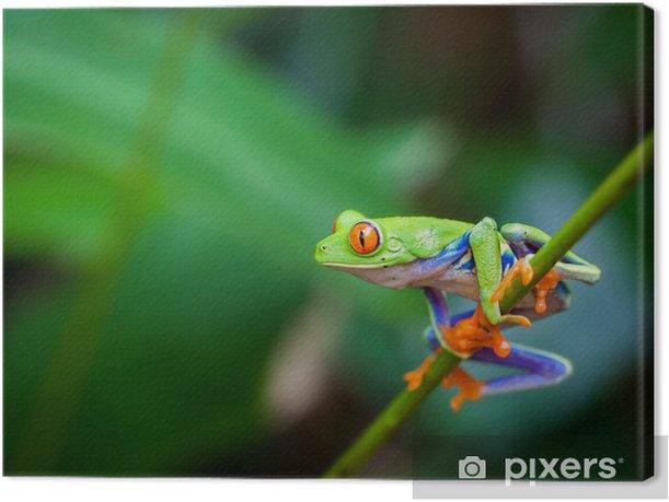 Obraz na płótnie Red eye frog - Żaby