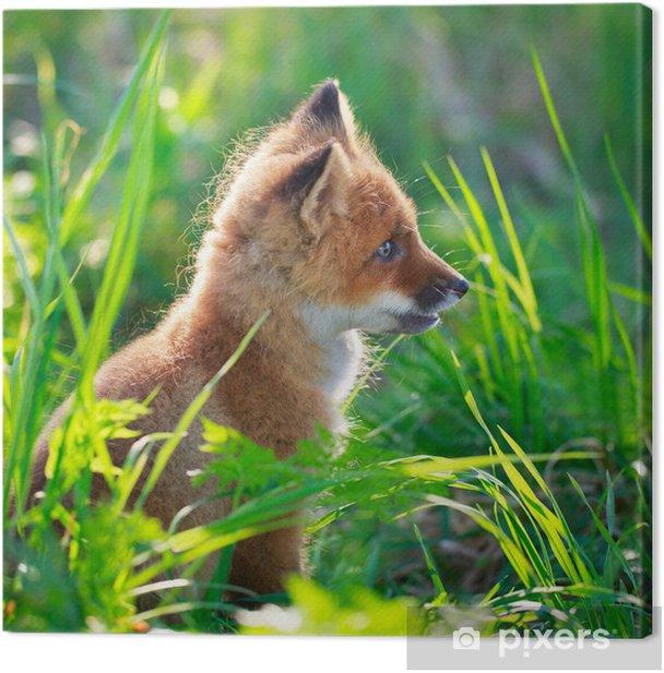 Obraz na płótnie Red Fox psinka - Tematy