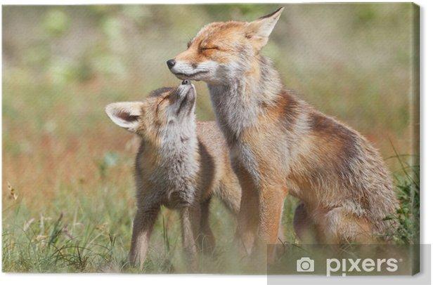 Obraz na płótnie Red fox z cub - Tematy