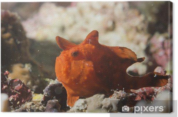 Obraz na płótnie Red Frog Fish - Zwierzęta żyjące pod wodą