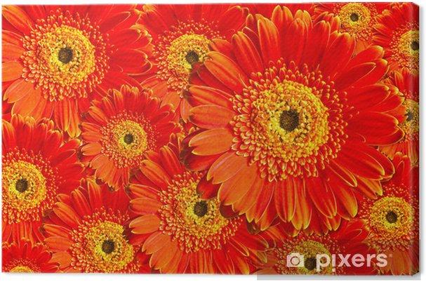 Obraz na płótnie Red Gerbera kwiat - Kwiaty