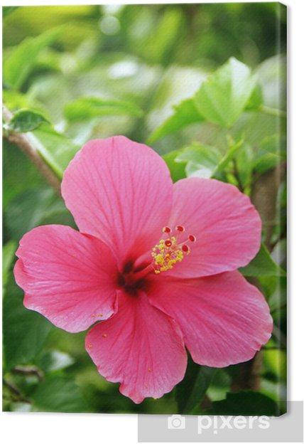 Obraz na płótnie Red hibiscus w rozkwicie - Kwiaty