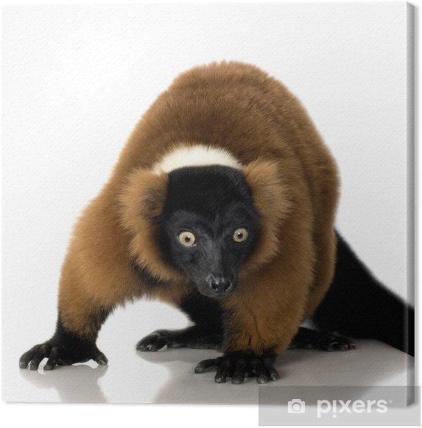 Obraz na płótnie Red Ruffed Lemur - Ssaki