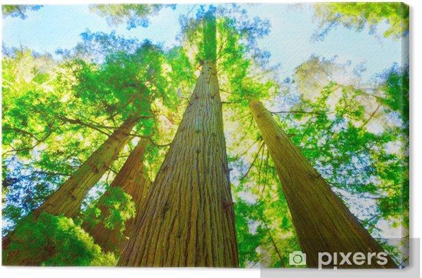 Obraz na płótnie Redwood Grove w północnej Kalifornii. - Ameryka