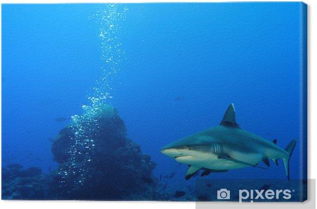 Obraz na płótnie Rekin szary szczęki gotowy do ataku pod wodą bliska portret - Zwierzęta żyjące pod wodą