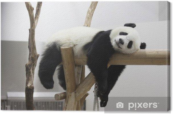Obraz na płótnie Reszta panda - Pandy