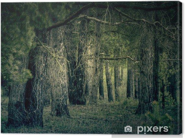 Obraz na płótnie Retro las sosnowy - Tła
