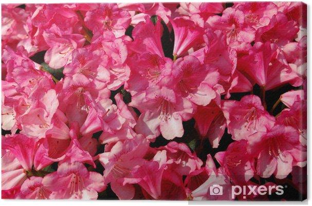 Obraz na płótnie Rhododendron - gluten - Kwiaty
