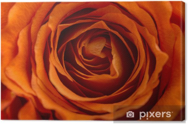 Obraz na płótnie Romantyczna pomarańczowy róża - Kwiaty