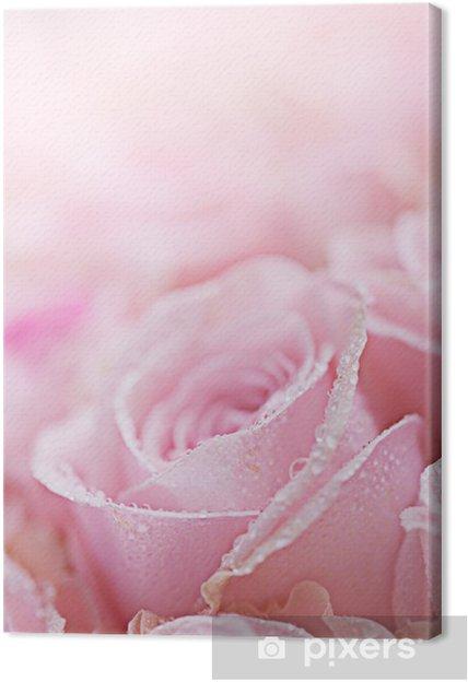 Obraz na płótnie Rosa Rosen mit Tautropfen - Kwiaty