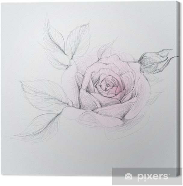 Obraz na płótnie ROSE / Realistic Sketch Wektor kwiatu - Sztuka i twórczość
