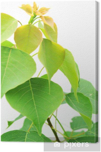 Obraz na płótnie Roślina - Ekologia