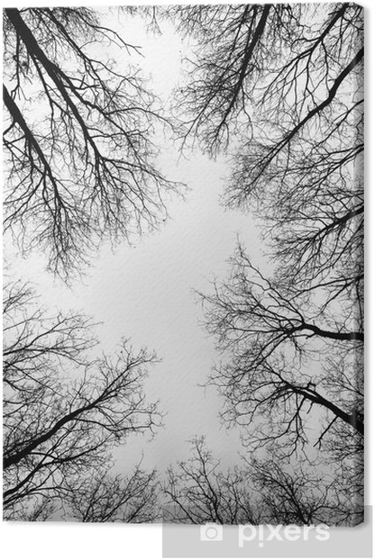 Obraz na płótnie Rozliczeń w lesie - Pory roku