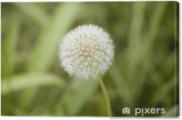 Obraz na płótnie Rozmyty kwiat - Kwiaty