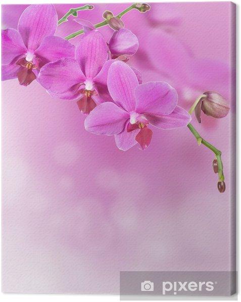 Obraz na płótnie Różowa orchidea w tle - Kwiaty