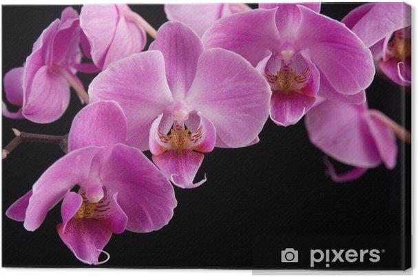 Obraz na płótnie Różowa orchidea, zbliżenie - Kwiaty