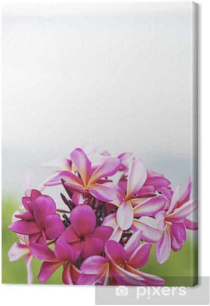 Obraz na płótnie Różowe Frangipani położyć na stole i na morzu -1 - Kwiaty