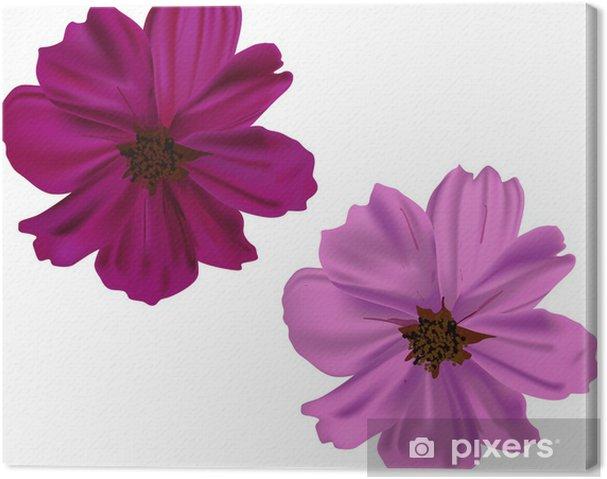 Obraz na płótnie Różowe i fioletowe kwiaty na białym tle - Rośliny i kwiaty