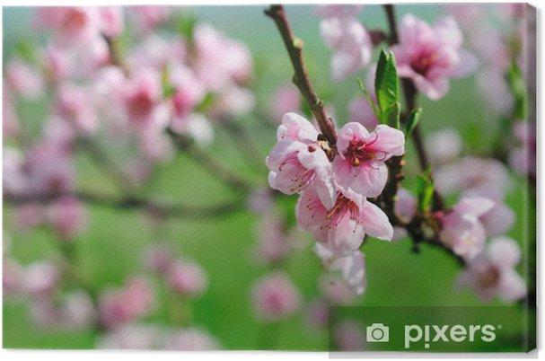 Obraz na płótnie Różowe kwiaty migdałów - Pory roku
