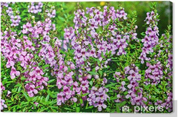 Obraz na płótnie Różowe kwiaty w ogrodzie ozdobnym - Kwiaty