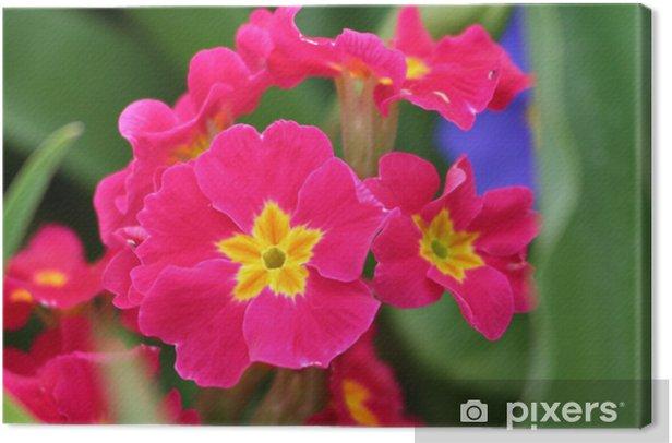 Obraz na płótnie Różowe płatki - Kwiaty