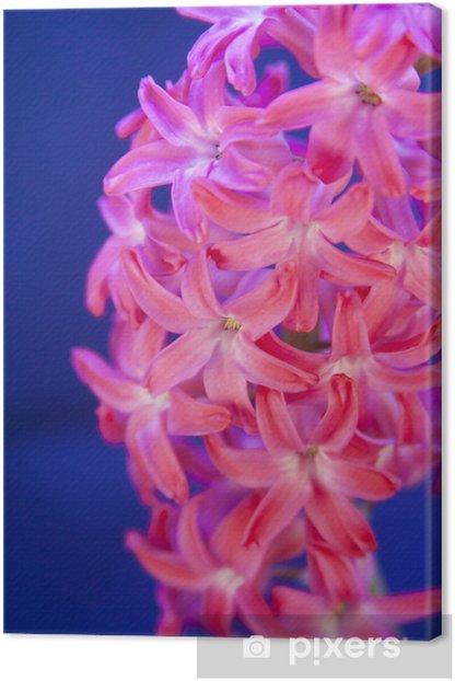 Obraz na płótnie Różowy kwiat hiacynt - Święta międzynarodowe