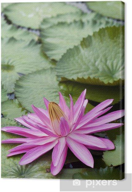 Obraz na płótnie Różowy kwiat lotosu - Kwiaty