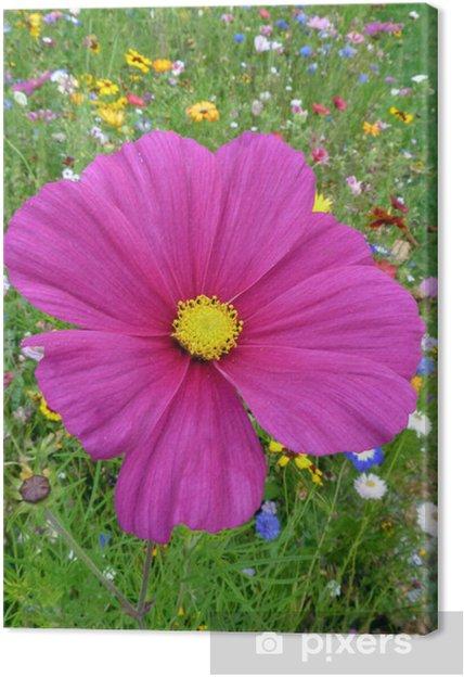 Obraz na płótnie Różowy kwiat na kolorowe łąki kwiat - Kwiaty