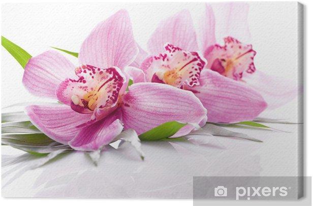 Obraz na płótnie Różowy kwiat orchidei - Kwiaty