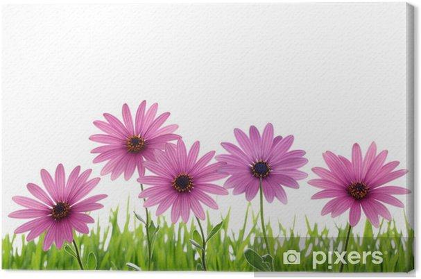 Obraz na płótnie Różowy kwiat stokrotka na zielonej trawie - Dom i ogród
