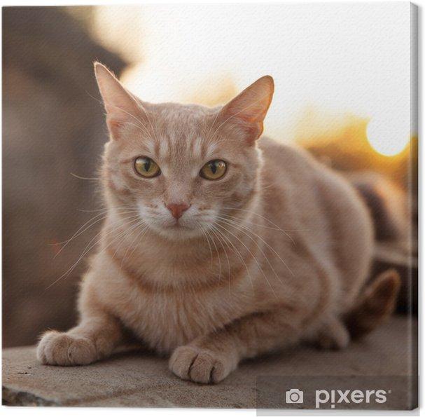 Obraz Na Płótnie Rudy Kot Leży I Gapi Się Na Nas Pixers żyjemy