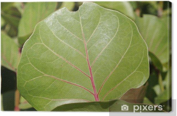 Obraz na płótnie Rys. liści - Rośliny