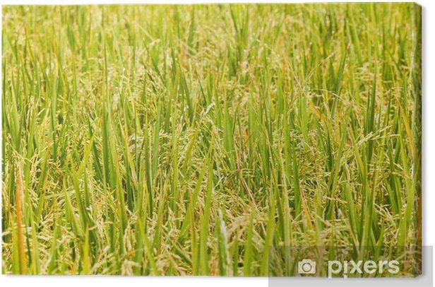 Obraz na płótnie Ryzowych - Rośliny