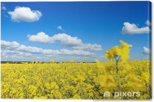 Obraz na płótnie Rzepakowy en fleur et ciel bleu - Pory roku