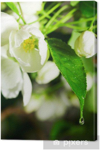Obraz na płótnie Rzuć się w kwiat. - Kwiaty