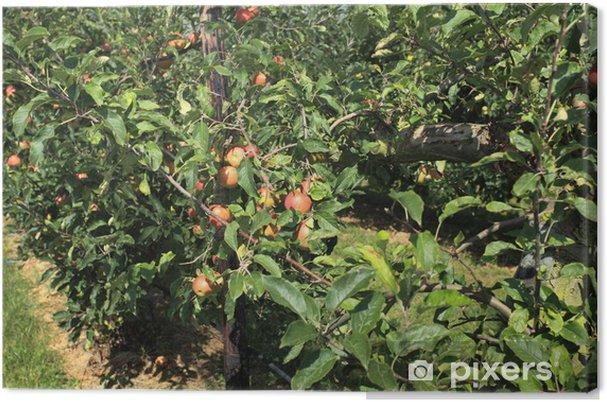 Obraz na płótnie Sad jabłkowy z siatki bezpieczeństwa - Rolnictwo