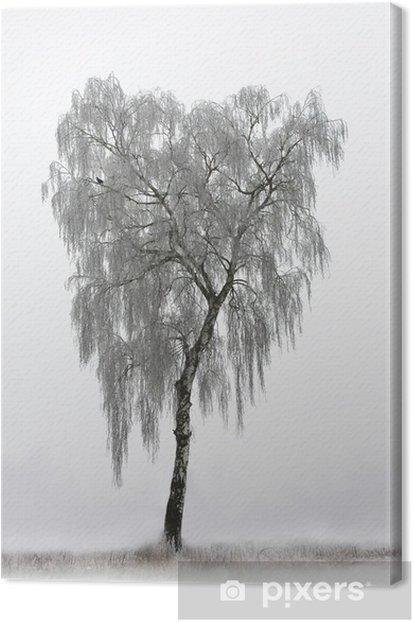 Obraz na płótnie Samotna brzoza - Drzewa